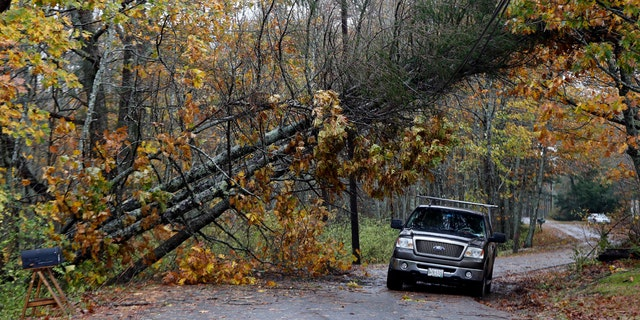 A motorist drives under downed pine trees that are resting on power lines in Freeport, Maine.