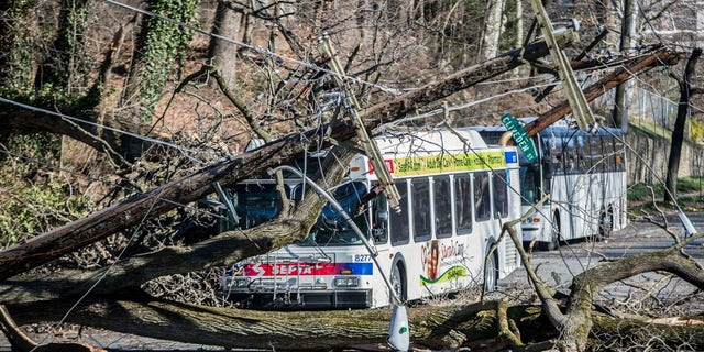 A bus is covered by a tree that collapsed onto power lines due to a storm last Friday in Bryan Mawr, Pa., Sunday, March 4, 2018