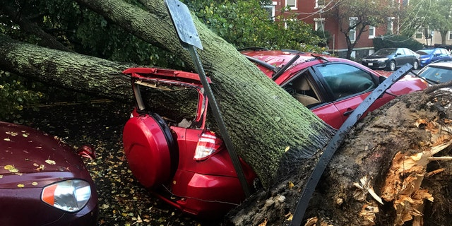 A large tree fell on top of a car on Mellen Street, in Portland, Maine, after an early morning storm.
