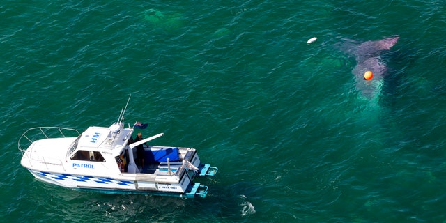 Jan. 7, 2015: A police boat circles a crashed plane in Lake Taupo in New Zealand.
