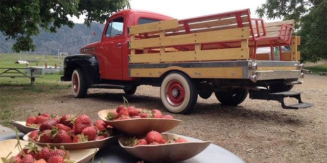 Working farms like Covert Farms invite guests for a day of berry-picking, hiking and wine tasting.