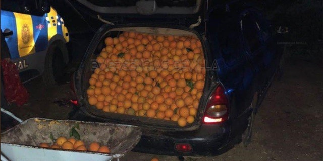 Police said when they opened the door to the vehicles, hundreds of oranges spilled out.