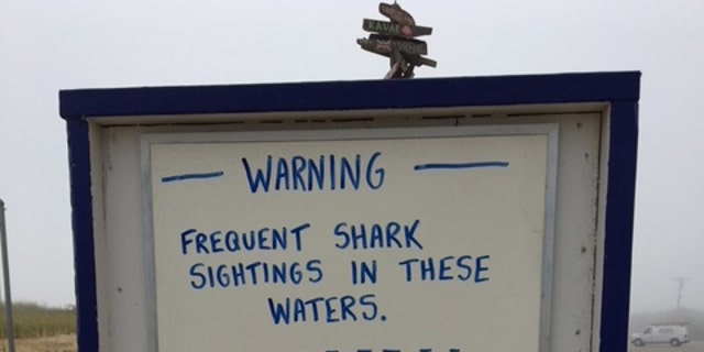 Similar warnings have been posted to the area's beaches this summer after a spate of shark sightings.