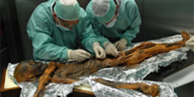 Scientists take samples from Ötzi's stomach during an exam in Bolzano, Italy, in November 2010. (Credit: South Tyrol Museum of ArchaeologyEuracM. Samadelli)