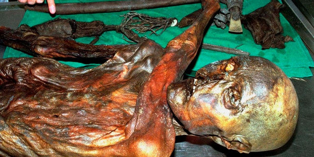 """An undated handout file photo shows """"Otzi"""", Italy's prehistoric iceman. """"Otzi"""", Italy's prehistoric iceman, probably does not have any modern day descendants, according to a study published on October 30, 2008. Otzi's 5,300-year-old corpse was found frozen in the Tyrolean Alps in 1991. (REUTERS/Handout/Files)"""