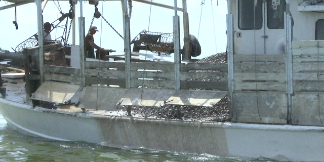 Limestone will provide a substrate for oysters, allowing them to have something to hold on to when they spawn.