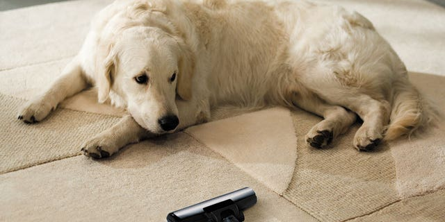 Leaving evidence of pets can be a major turn-off for potential buyers.