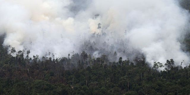 Thick smoke billows from raging forest fires in Indonesia's Sumatra island on June 21, 2013. Fires in Indonesia that have cloaked Singapore in record levels of smog highlight the continued failure of efforts to prevent illegal slash-and-burn land clearance in a country with a history of chaotic forest management, activists say.