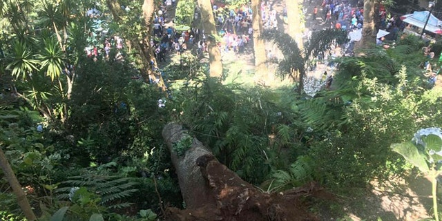 A fallen tree is seen at the scene where the tree fell on a a large crowd gathered as part of a traditional religious festival in the outskirts of Funchal, the capital of Madeira island, Portugal.