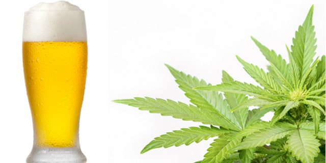 Homebrewers in Colorado and Washington will legally be allowed to add marijuana to their homebrew recipes.
