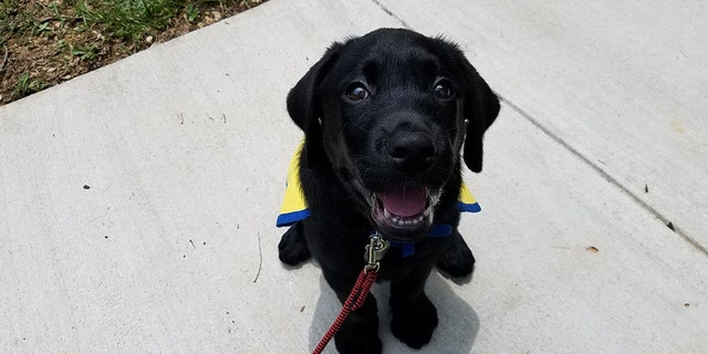 """One puppy will be named """"Chance"""" in honor of former University of Georgia baseball player Chance Veazey."""