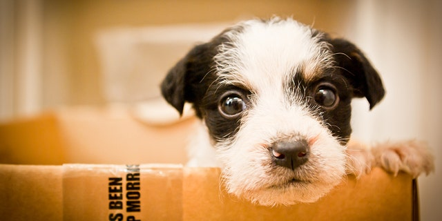 California will become the first state to require pet stores to sell rescue animals.