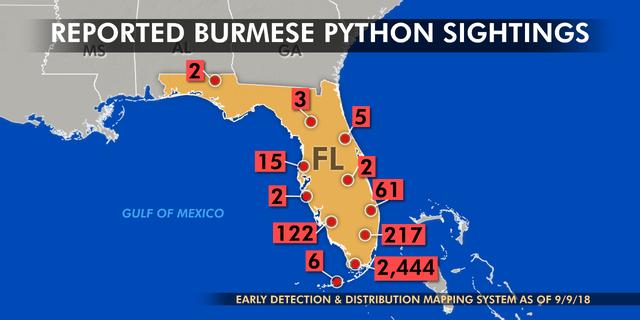 Pythons In Florida Map.Hybrid Python Threat Has Spread Beyond Florida Everglades Dna Study