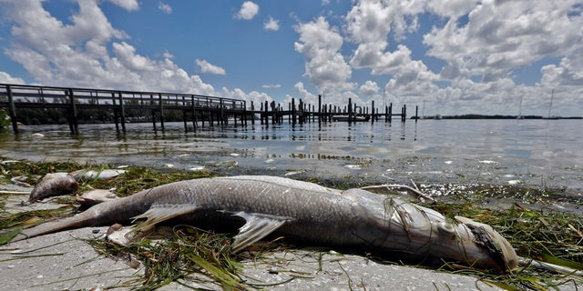 From Naples in Southwest Florida, about 135 miles north, beach communities along the Gulf coast have been plagued with red tide.