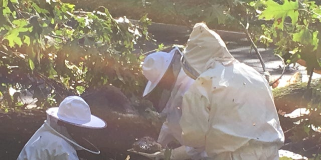 """It was a """"catastrophic situation for the bee colony inside,"""" Berben said."""
