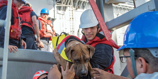 Sailors help Zeus, one of two dogs who were accompanying two mariners who were aided by the amphibious dock landing ship USS Ashland.