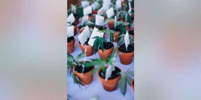 Pot plant party favors might be cute but they're not legal across the country.