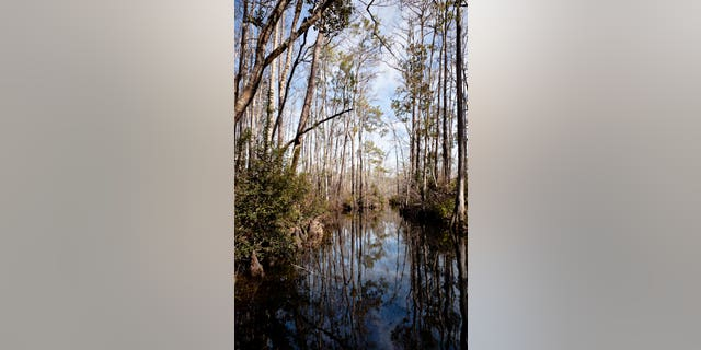 Vertical swamp landscape with a dark river curving away surrounded by trees.