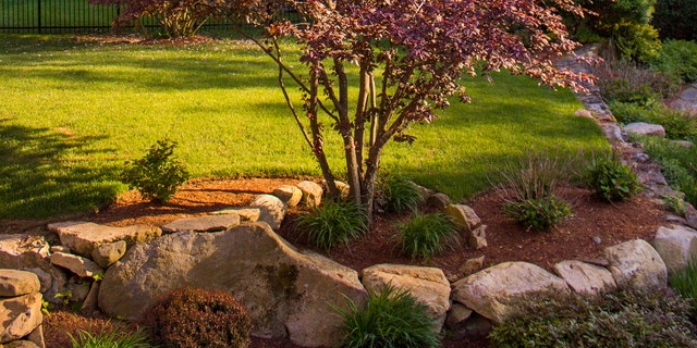 """Make sure your trees get some breathing room. Placing rocks too close """"can actually kill your tree,"""" warns landscaper Cassy Aoyagi."""
