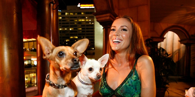 """Actress Alyssa Milano smiles next to Rusco (L) and Chihuahuas Angel, respectively Papi and Chloe in the movie, at the party following the world premiere of """"Beverly Hills Chihuahua"""" in Hollywood, California September 18, 2008. The movie opens in the U.S. on October 3.   REUTERS/Mario Anzuoni   (UNITED STATES) - RTR221PY"""