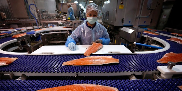 The FDA for the first time has approved the sale of genetically modified salmon. In this photo, a worker inspects a Tasmanian salmon fillet at the processing plant in Australia.