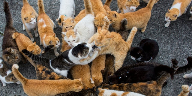Cats vie for food. (Reuters)