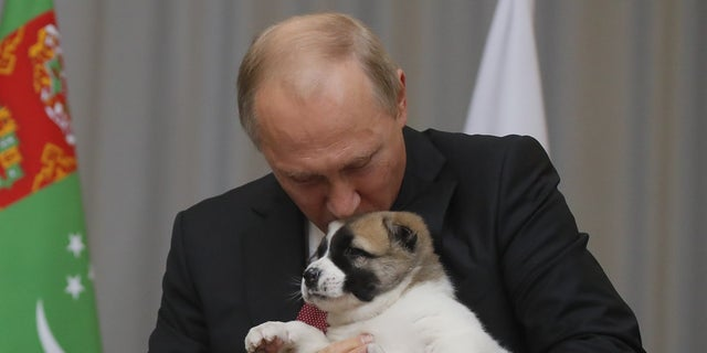Russian President Vladimir Putin kissed the puppy on the head after he was presented with the birthday gift.