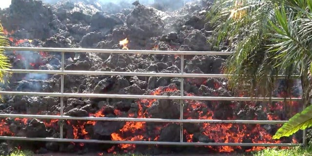 Lava advances towards a metal barrier in Puna, Hawaii, over the weekend.