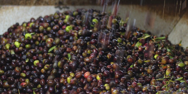 Olives are poured into a grinding machine before they are pressed to be made into oil. (Reuters)