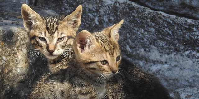 Two kittens lie in the ruins of the ancient Agora in Athens June 20, 2015. REUTERS/Paul Hanna