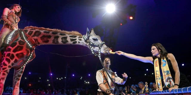 Princess Stephanie of Monaco (R) gives a banana to a giraffe as Merrylu Richter and Jozsef Richter perform during the Gala evening of the 42th Monte-Carlo International Circus Festival in Monaco.