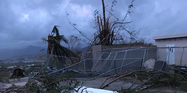 Hurricane Maria triggered enormous damage across Puerto Rico, killing many of the island's abandoned dogs.