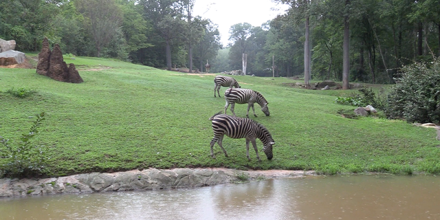 """""""Our staff are experienced with severe weather events and we will be relying on their teamwork and passion for the wildlife at the North Carolina Zoo during this event,"""" Communications and Marketing Director Diane Villa said."""