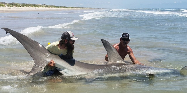 A fisherman and his friend caught a 12-foot hammerhead shark off the gulf coast of Texas.