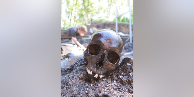 A skeleton is pictured at the excavation site in Denmark.