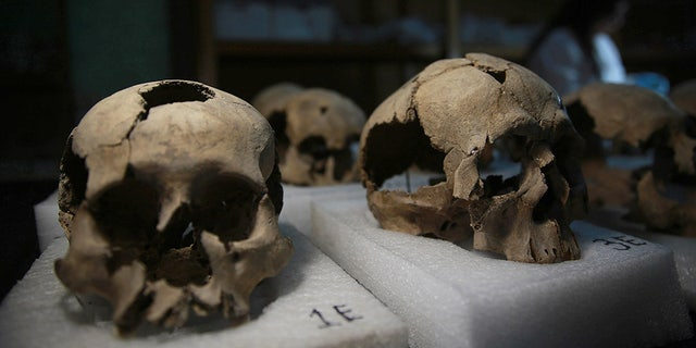 MEXICO CITY, MEXICO -  JULY 10: Skulls, which were found during an excavation work, are seen in National Institute of Anthropology and History's laboratory in Mexico City, Mexico on July 10, 2017. More than 650 skulls and thousands of fragments were found near Templo Mayor, one of the main temples in the Aztec capital Tenochtitlan, which later became Mexico City. The discovery has raised new questions about the culture of sacrifice in the Aztec Empire. (Photo by Daniel Cardenas/Anadolu Agency/Getty Images)