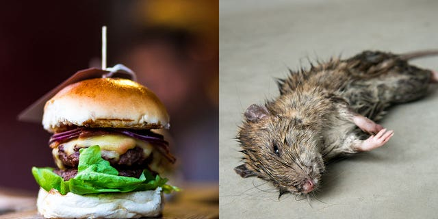 The man claims he was eating a slider, much like the one pictured above, when he bit into the gross little mouse, which actually looked a lot grosser than the one pictured above.