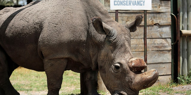 "Researchers say Sudan has died after ""age-related complications."""