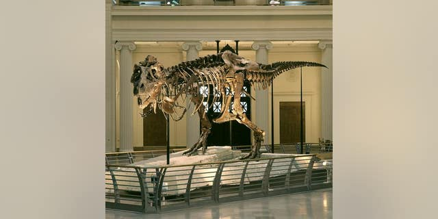 Two decades ago, a fight over the <em>Tyrannosaurus rex</em> named Sue made headlines. Sue now resides at The Field Museum in Chicago.