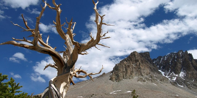 ...is this place in Great Basin NP, NV. Bristlecone pine trees and rock glacier. Image made at 11mm.