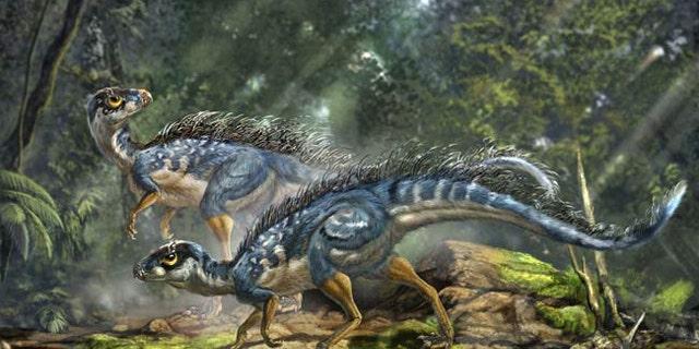 Artist's reconstruction of Tianyulong confuciusi, a feathered heterodontosaurid ornithischian dinosaur.