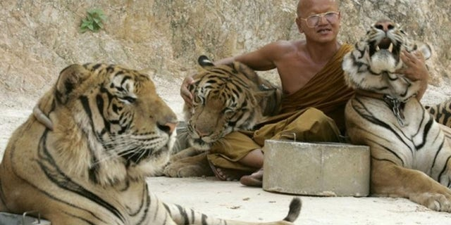 Wat Pa Luang Ta Bua, or Tiger Temple, in Thailand's western Kanchanaburi province, has been investigated for links to wildlife trafficking.
