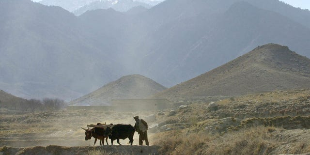 FILE -- In this Dec. 28, 2001 file photo, an Afghan farmer works on his field, on the outskirts of the village of Madakhel in northeastern Afghanistan, near the mountain region of Tora Bora which is seen in the background. An Afghan official says Islamic State fighters have captured some territory around Tora Bora, the former stronghold of Osama bin Laden in eastern Afghanistan's Nangarhar province. (AP Photo/Enric Marti, File)