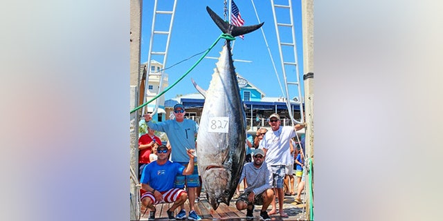 The bluefin, which was caught in May 2017, weighed 826-pounds and 8-ounces.