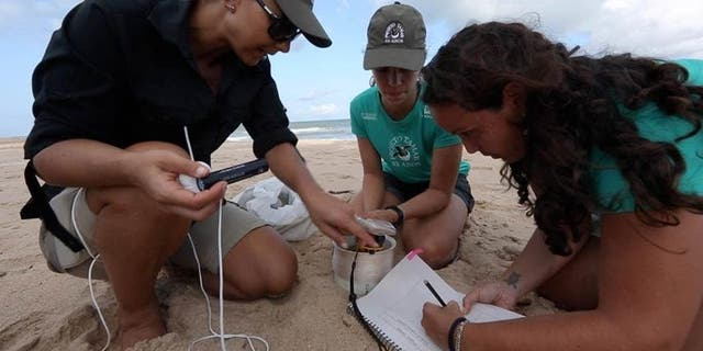 Florida State University's Mariana Fuentes, left, and her team at a nesting site.