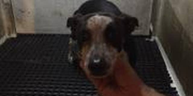 Qu allegedly poured boiling water on the dog several times Tuesday night, police said