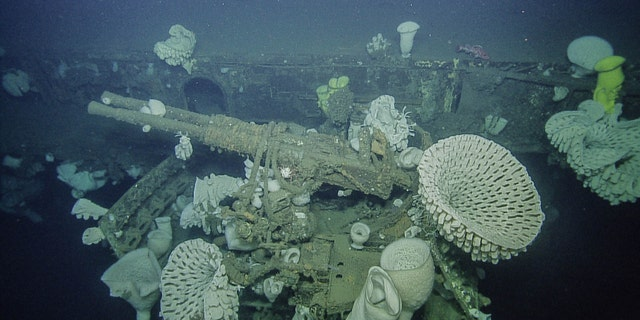 Bofors 40mm anti-aircraft weaponry surrounded by massive glass sponges (OET/Nautilus Live).