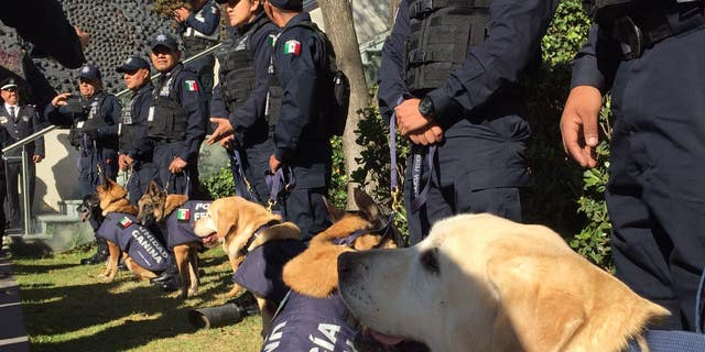 For the first time, K-9 dogs in Mexico got a full-blown recognition for their service.