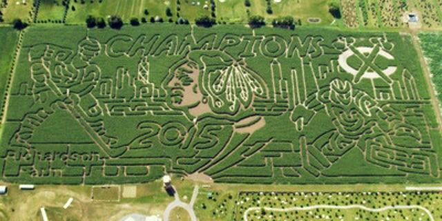 Blackhawks' corn maze.