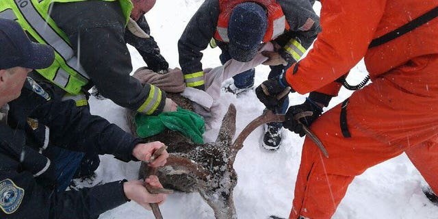 Firemen and animal control officials in Lakewood, Colo., came to the aid of a deer that had fallen through the ice at the city's frozen reservoir.